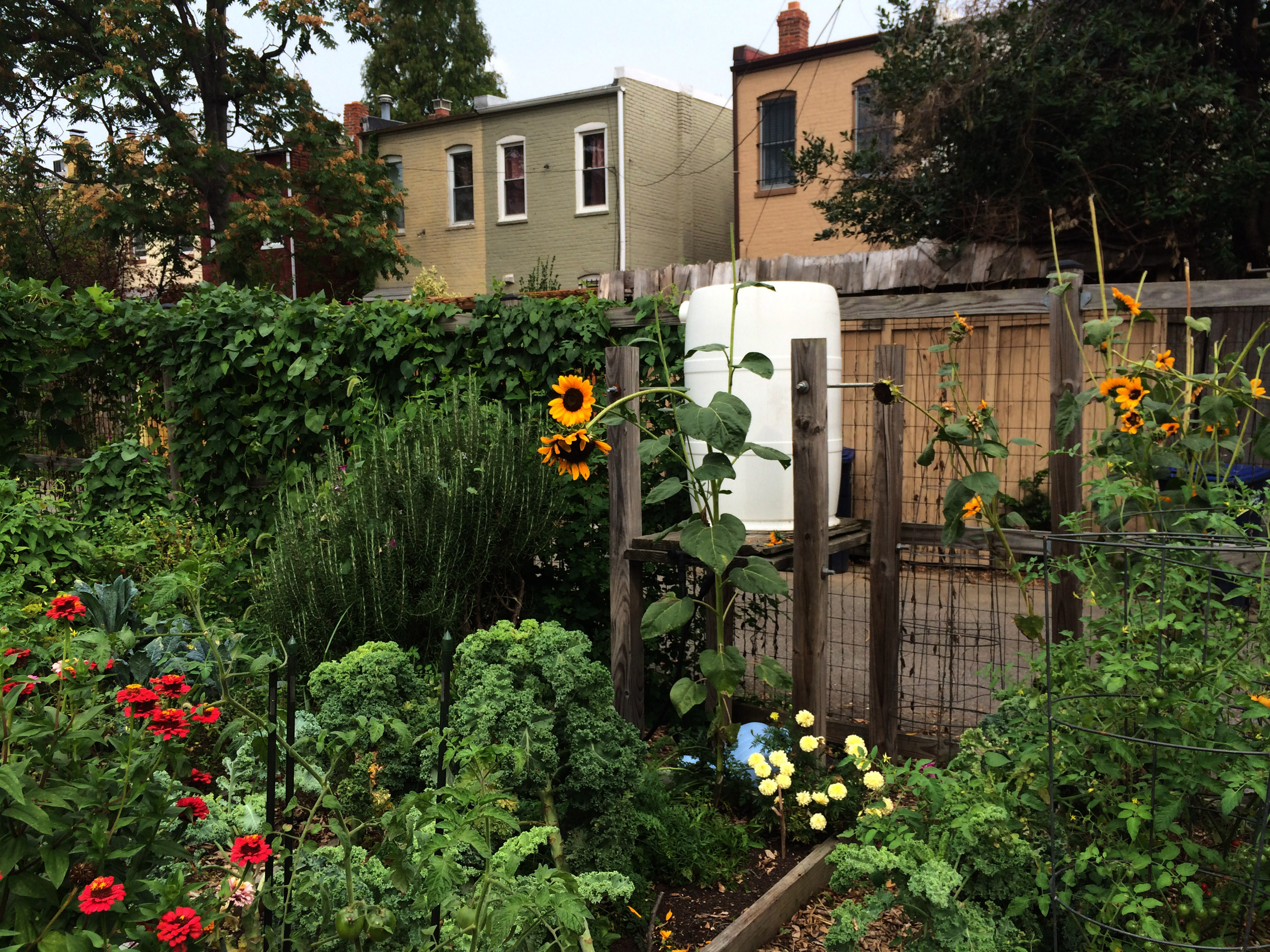 Capitol Hill Has More Colorful Community Gardens Than Any Other  Neighborhood In The City. Three Gardens Are Part Of The DC Department Of  Parks And ...