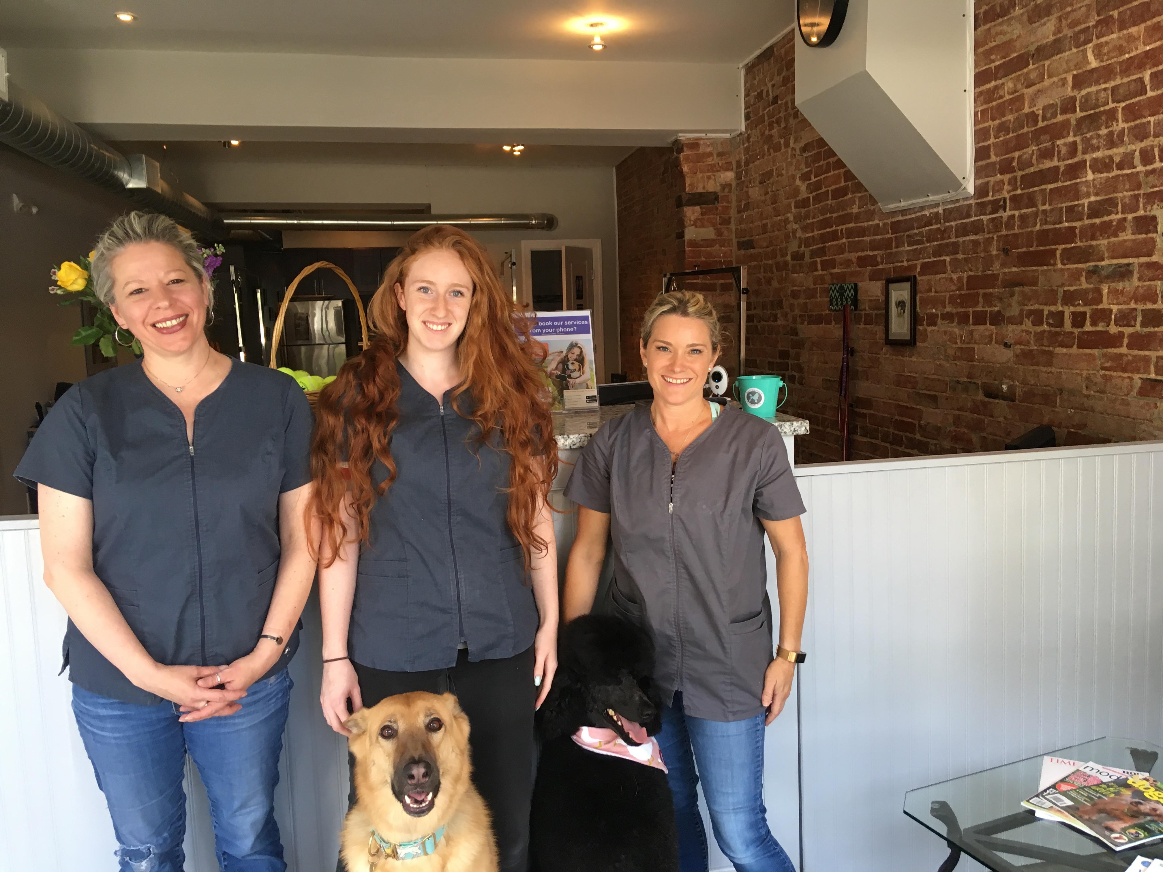 Four Seasons Of Dog Spas Open On H Street Hillrag